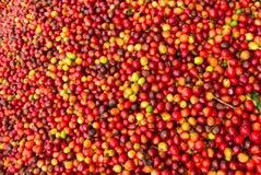 Kaffeestauraum Lizenzfreie Stockbilder