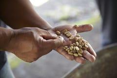 Kaffekoloni, Boquete, Panama16 royaltyfria bilder
