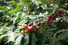 Kaffekoloni i den lantliga staden av Carmo de Minas Brazil Arkivfoton