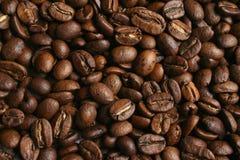 kaffekorn Royaltyfria Foton