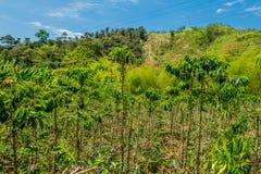 Kaffelantgård i Manizales, Colombia arkivbild