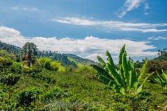 Kaffelantgård i Manizales, Colombia arkivfoto