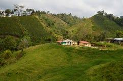 Kaffelantgårdlandskap i Salento Arkivfoto