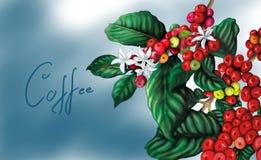 Kaffeväxt med bakgrund royaltyfri illustrationer