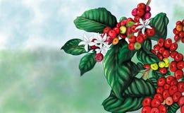 Kaffeväxt med bakgrund stock illustrationer