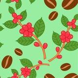 Kaffeväxtmodell royaltyfri illustrationer