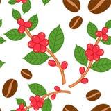 Kaffeväxtmodell stock illustrationer