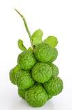 Kaffir lime. Group of kaffir Lime or Bergamot fruit on white background royalty free stock image
