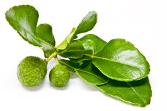 Kaffir Lime And Leaves Stock Images