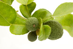 Kaffir lime / bergamot fruit Royalty Free Stock Images