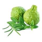 Kaffir Lime or Bergamot fruit and fresh mint, rosemary is isolat Stock Image