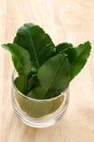 Kaffir Lime Stock Image