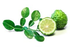 Kaffir lime, a fruit used in Lao and Thai curry paste. Royalty Free Stock Images