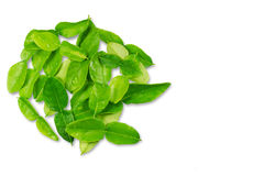 Kaffir lime herbal  leaves on white background Royalty Free Stock Photography