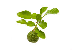 Kaffir lime. Isolated kaffir lime on white background Stock Photography