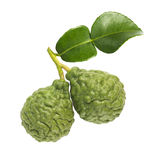 Kaffir Lime Stock Photo