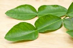 Kaffir Lime Leaf Royalty Free Stock Photos