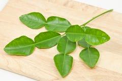Kaffir lime leaf Royalty Free Stock Photography