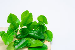 Kaffir lime leaf Stock Photography