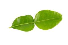 Kaffir lime leaf. Isolated on white background royalty free stock image