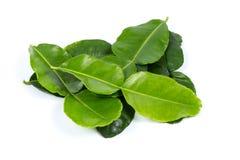 Kaffir lime leaf. On white background stock images