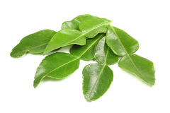 Kaffir lime leafs Royalty Free Stock Photography