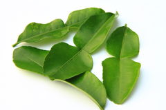 Kaffir lime leaves. Kaffir lime leaves on a white background royalty free stock photography