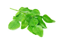 Kaffir lime leaves Royalty Free Stock Photos
