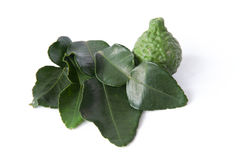 Kaffir Lime Leaves Stock Image