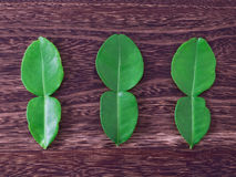 Kaffir lime leaves Stock Images