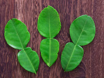 Kaffir lime leaves Royalty Free Stock Photography