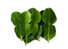 Free Kaffir Lime Leaves Royalty Free Stock Photos - 24533838