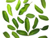 Kaffir lime leaves help nourish scalp and hair. Kaffir lime leaves And shampoo bottles help nourish scalp and hair Isolated on white background royalty free stock images