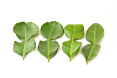 Kaffir lime leaves isolated Royalty Free Stock Image