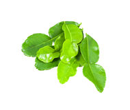 Kaffir lime leaves isolated with clipping path Royalty Free Stock Photography