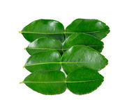 Kaffir lime leaves Royalty Free Stock Photography