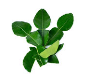 Kaffir lime leaves Royalty Free Stock Images
