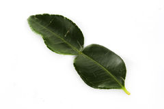 Kaffir lime leaves Royalty Free Stock Photo