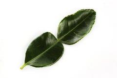 Kaffir lime leaves Stock Photo