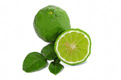 Kaffir lime with leaves isolated on white background Royalty Free Stock Photography
