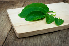 Kaffir lime leaves isolated on a wood background stock images