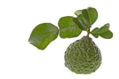 Kaffir Lime and Leaves Macro Stock Images
