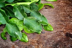Kaffir lime leaves. On wood background stock photography