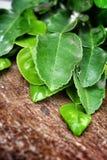 Kaffir lime leaves Stock Photos