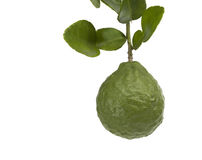 Kaffir Lime. On white background Royalty Free Stock Photography