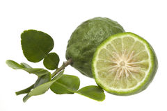 Kaffir Lime. On white background Royalty Free Stock Image