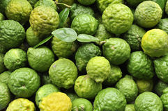 Kaffir Limes Stock Images