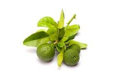 Kaffirlimefrukt på vit bakgrund Arkivfoto