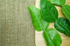 kaffirlimefruktblad på trä Arkivfoton