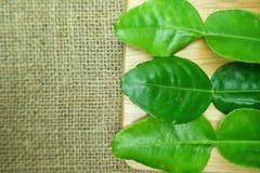 kaffirlimefruktblad på trä Royaltyfri Foto